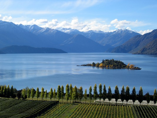Wanaka Vineyard and Wine Tasting