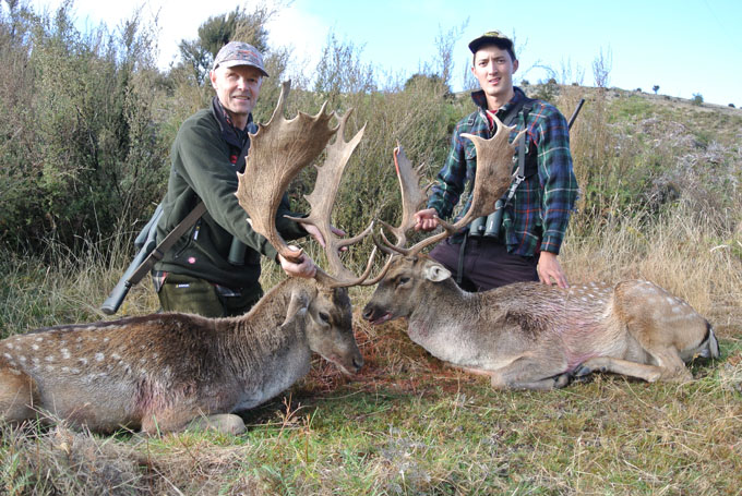 New Zealand Hunting for fallow bucks