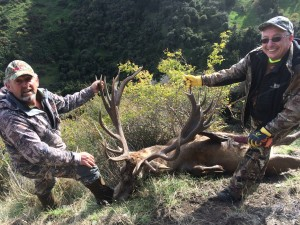 Red Stag hunt with Telford Hunting NZ Ltd